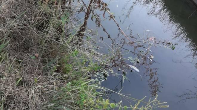 Morìa di pesci Porta Elisa condotto pubblico spalti Mura