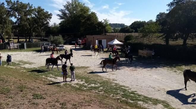 Palio 2021, prove della mattina in buca a fucecchio, feriti due cavalli