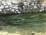 pesci morti nel condotto pubblico