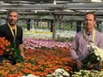 Altopascio Blumen crisantemi