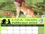 Cani e gatti in adozione, pronto il calendario della Lida Versilia con i clic dei Fotoscattosi