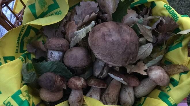 funghi Coldiretti Campagna Amica